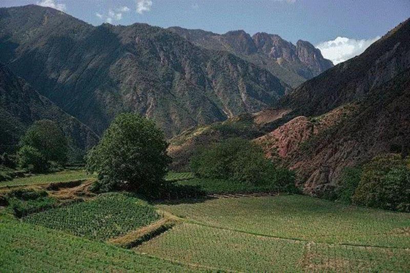 Ao Yun, los nuevos vinos del Himalaya a U$S 300 la botella