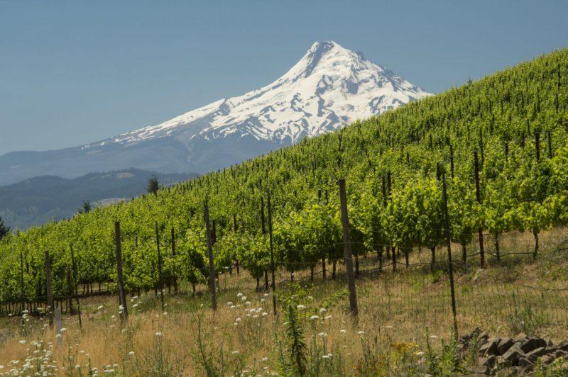 El Estado de Washington, EEUU se convierte en una potencia mundial en vinos