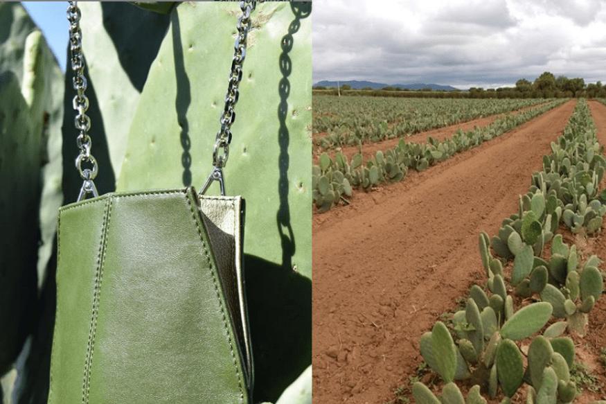 Dos amigos mexicanos crean cuero vegano a partir del cactus