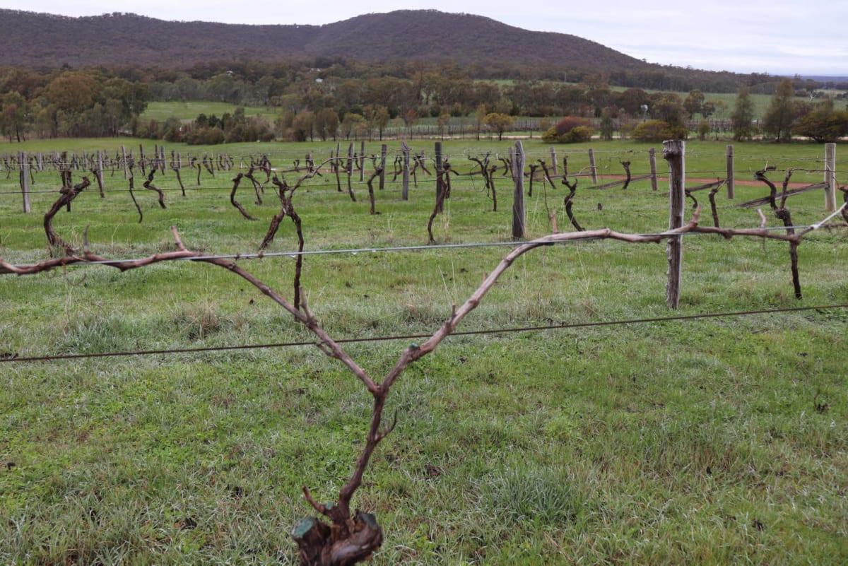 2019 cerraría con una caída del 11% en la producción mundial de vino