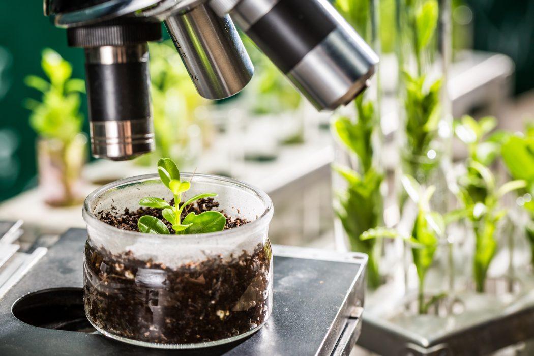Preparando los cultivos para el clima del futuro
