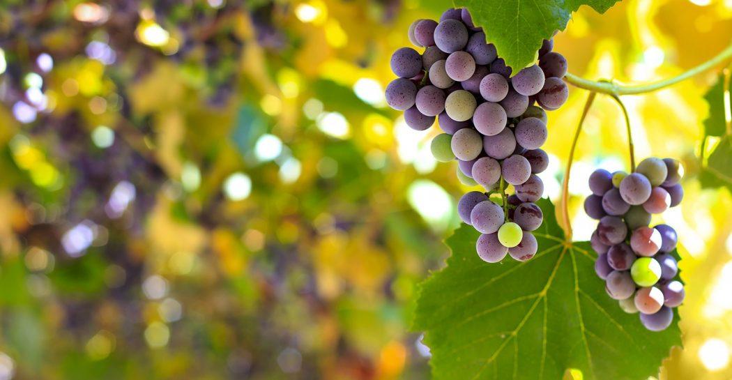 El cambio climático deja obsoleta la clasificación entre vinos del Viejo Mundo y del Nuevo Mundo