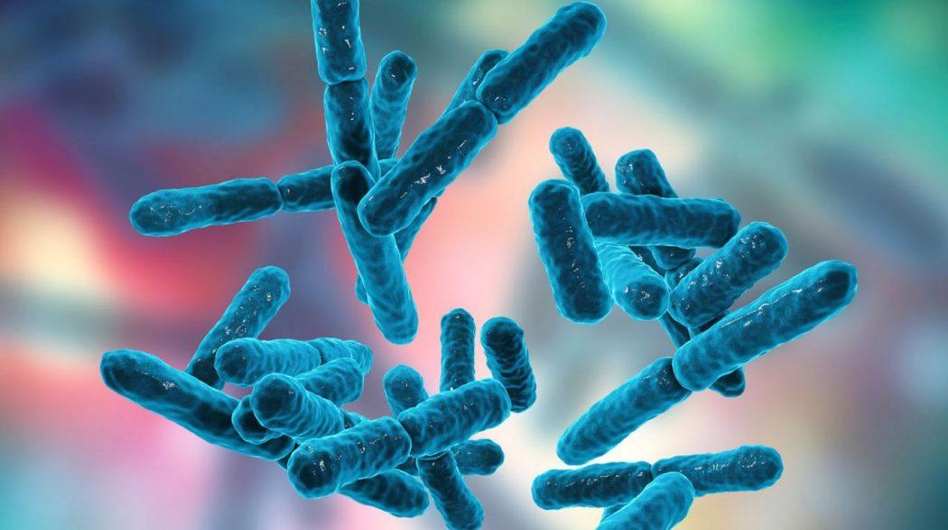 Suero de leche, opción económica para cultivar probióticos