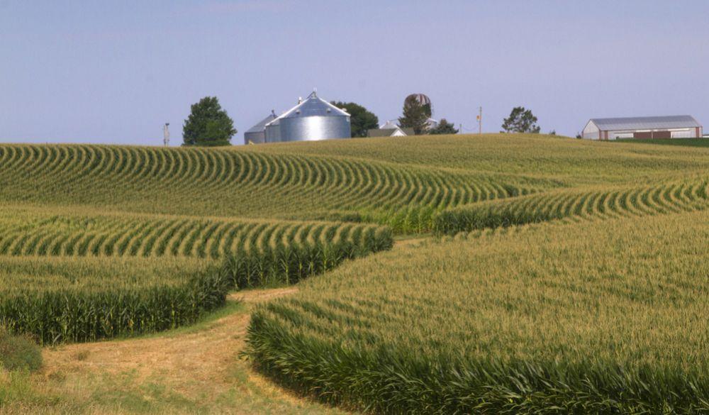 Investigadores encuentran que por el cambio climático el Corn Belt podría desplazarse hacía el norte