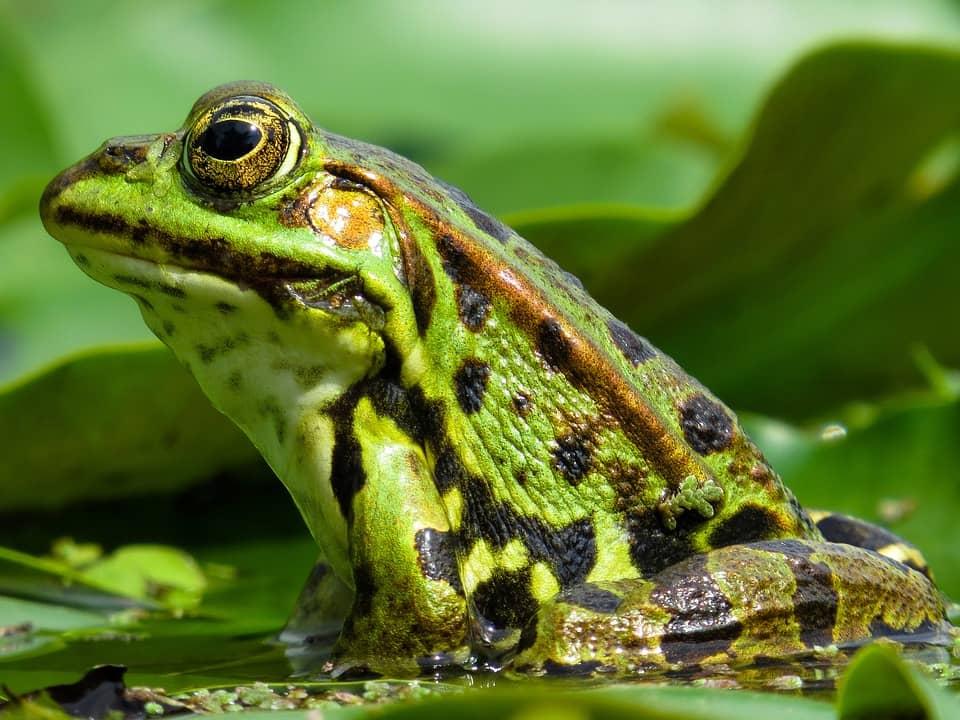 Ecuador: científicos descubren propiedades medicinales en la piel de los anfibios
