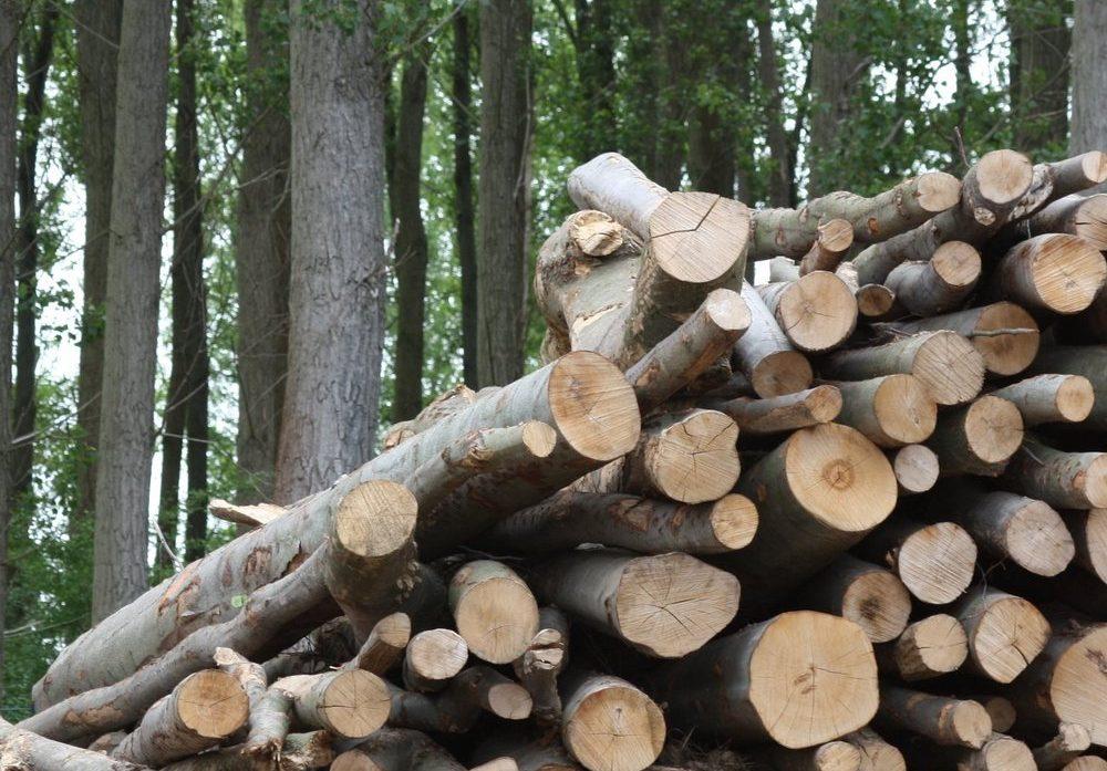 Localidad canadiense reemplaza propano por biomasa