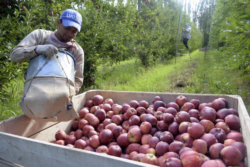 Buscan producir biogás y fertilizantes a partir de orujo de frutas