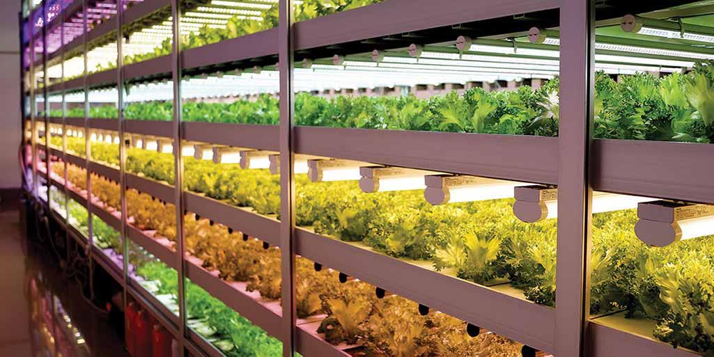 Bayer pone un pie en la agricultura vertical