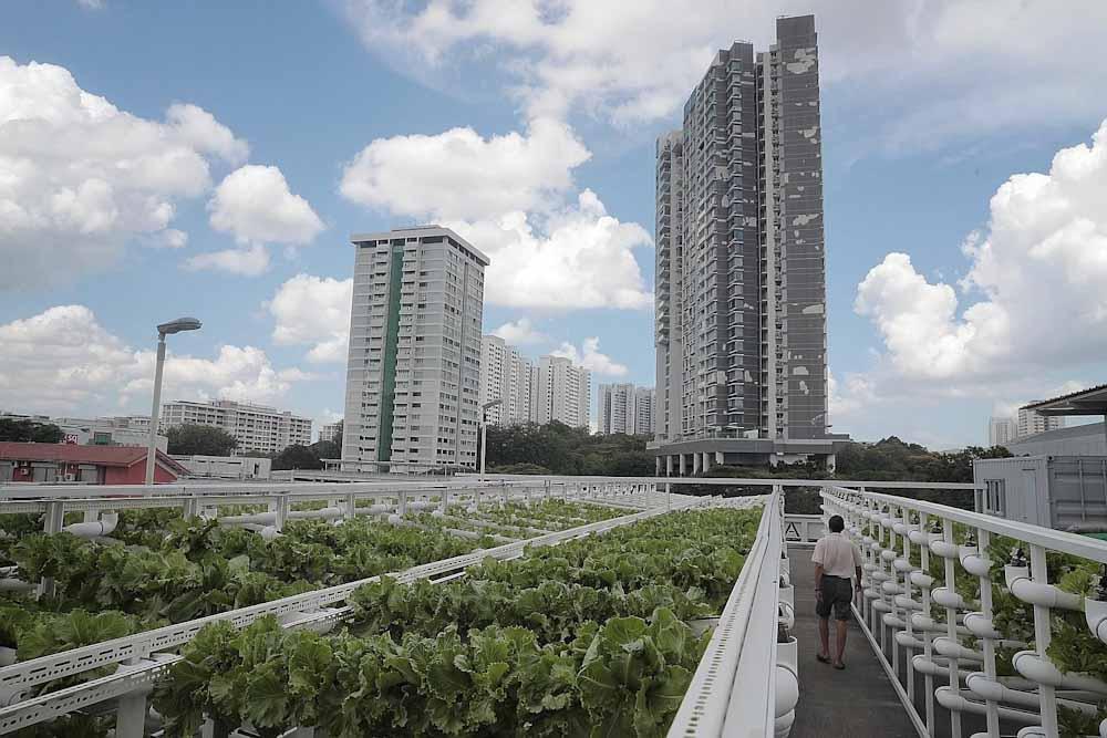 Las terrazas de los edificios de estacionamiento de Singapur se convierten en granjas urbanas