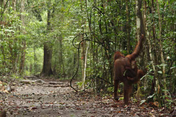 Mientras crecen las dudas por su política de preservación de bosques, Indonesia es recompensada por frenar la deforestación