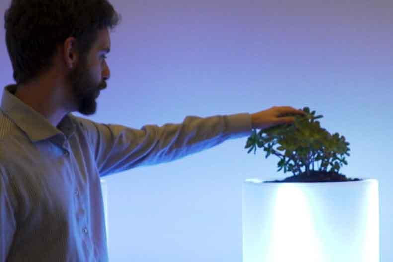 Bioo: la 'startup' que genera electricidad directamente de las plantas