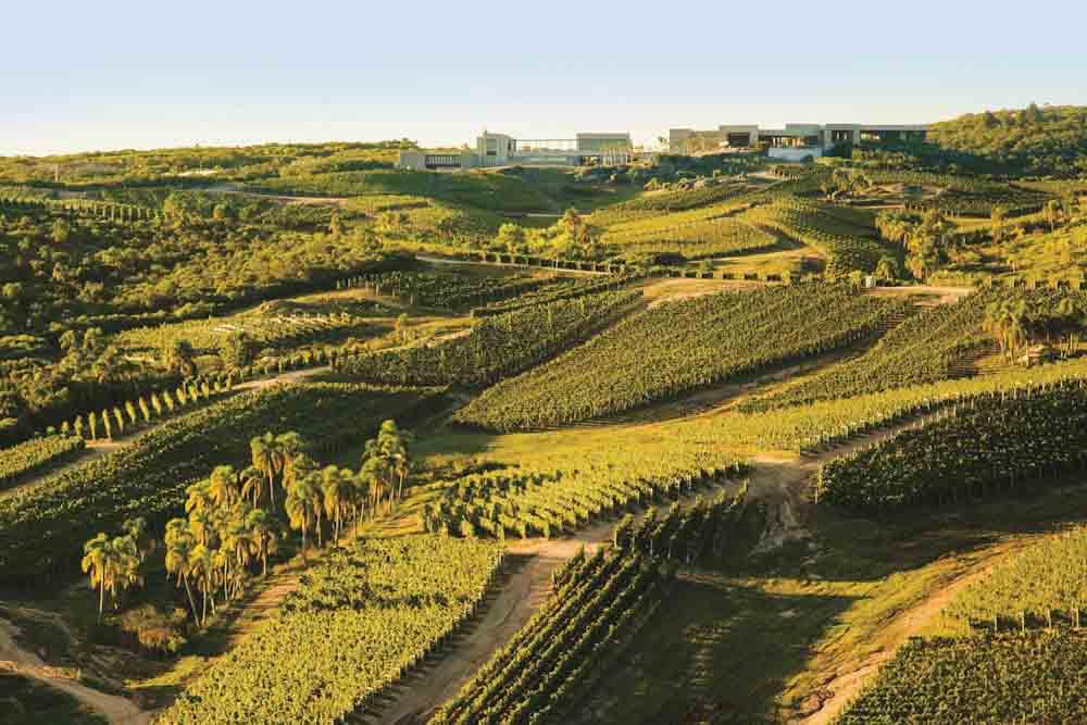 En una pequeña región vinícola de Uruguay la cepa tannat causa una gran impresión