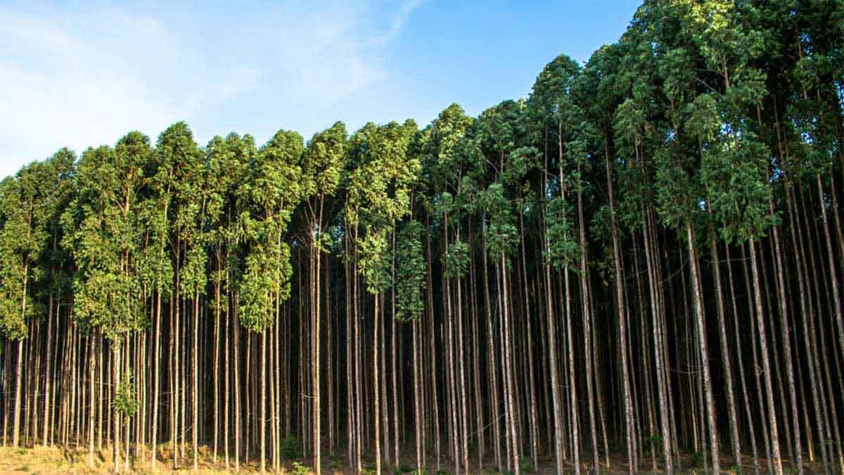 BP toma control de la mayor compañía estadounidense de créditos de compensación de carbono forestal