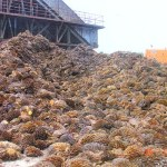 Biomass Energy in Indonesia