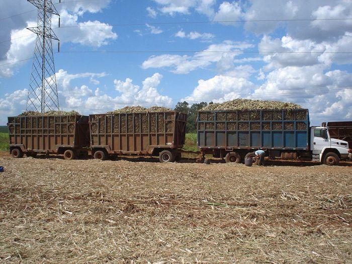 Sugarcane-mechanical-harvest