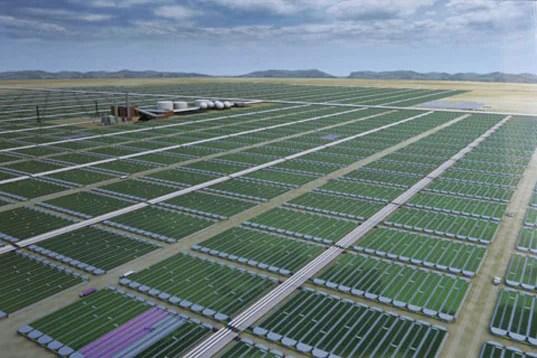 algae-biorefinery