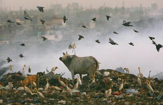 india_garbage_dump
