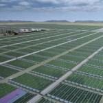 Insights into Algae Biorefinery