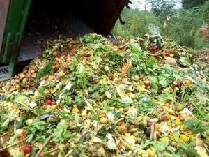 rp_food_waste1-300x225