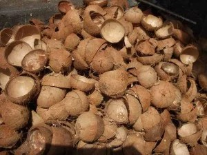 coconut-shell-biomass