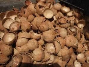 coconut-shell-biomass