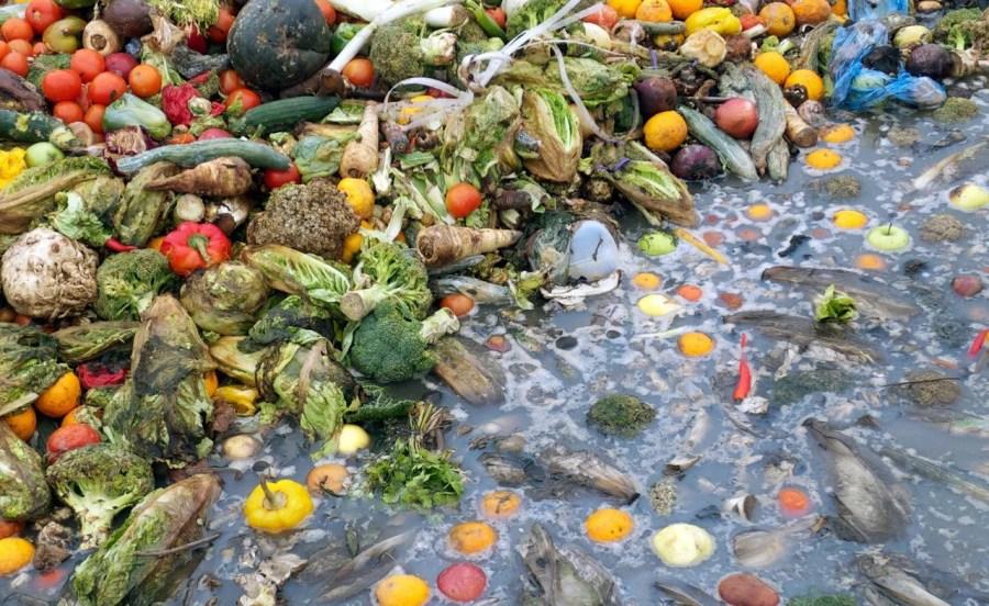 food-waste-india