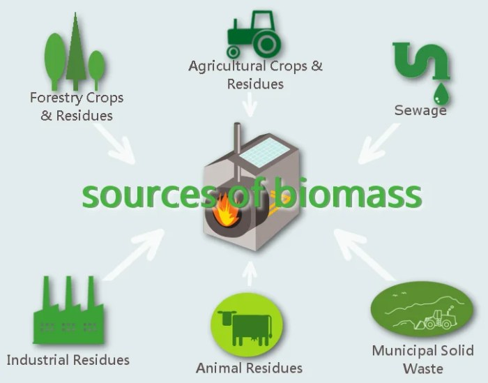 A quick glance at popular biomass resources