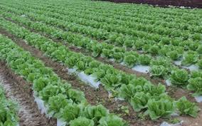 What is Organic Liquid Fertilizer | BioEnergy Consult