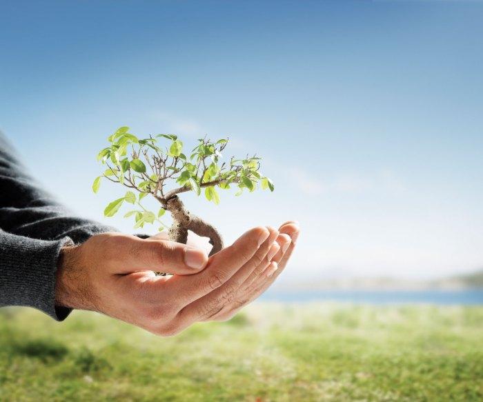 environmental-consultancy