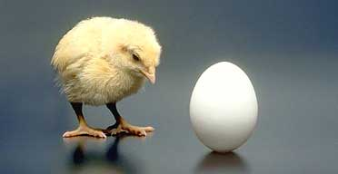 https://i2.wp.com/www.bioethics.net/wp-content/uploads/2012/02/chicken192.jpg