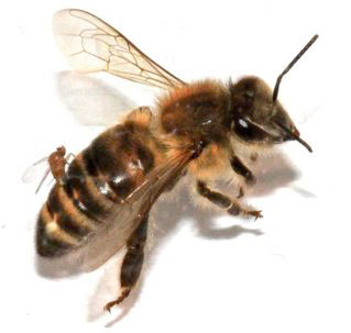 Get involved in citizen science… help the honeybees!