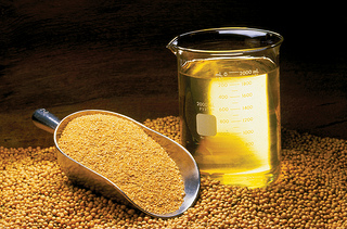 What do you want to know about Plenish® Soybeans?