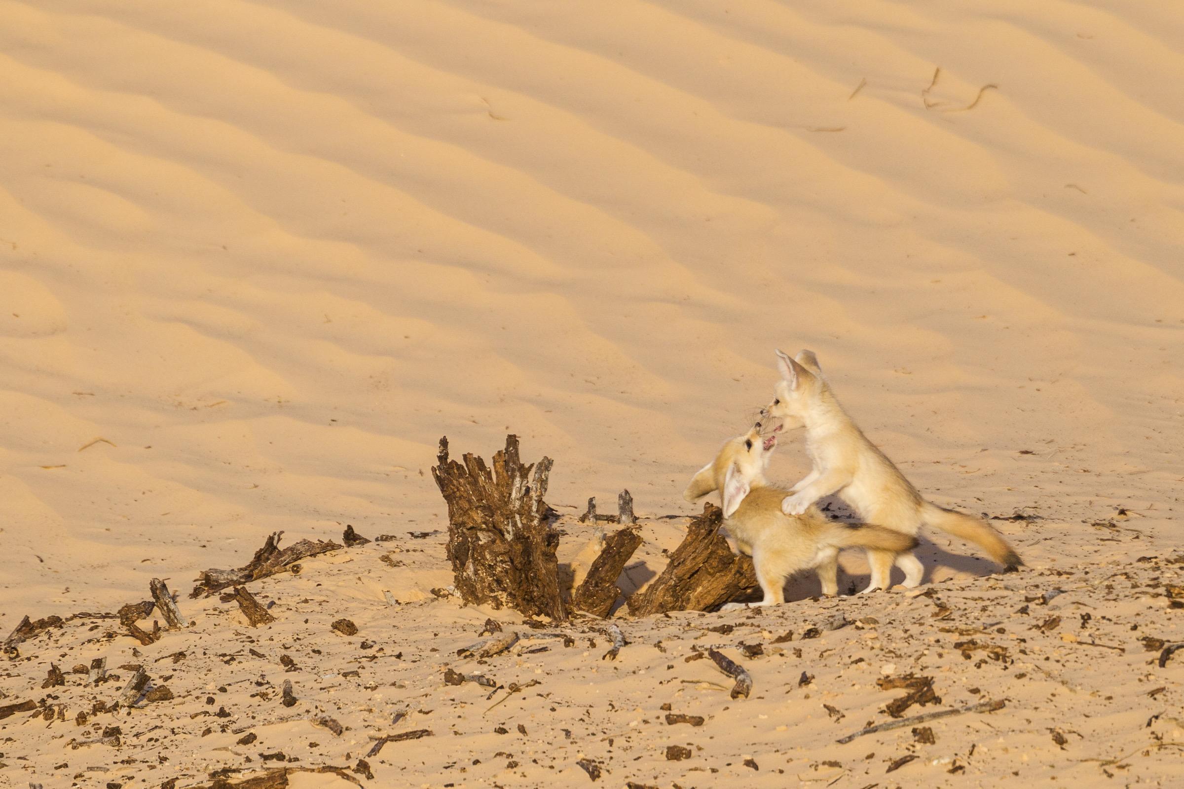 Spirit Of The Sahara