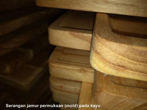 mencegah serangan jamur pada kayu menggunakan biocide