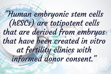 Human Embryonic Stem Cells (Totipotent Perinatal Stem Cell)