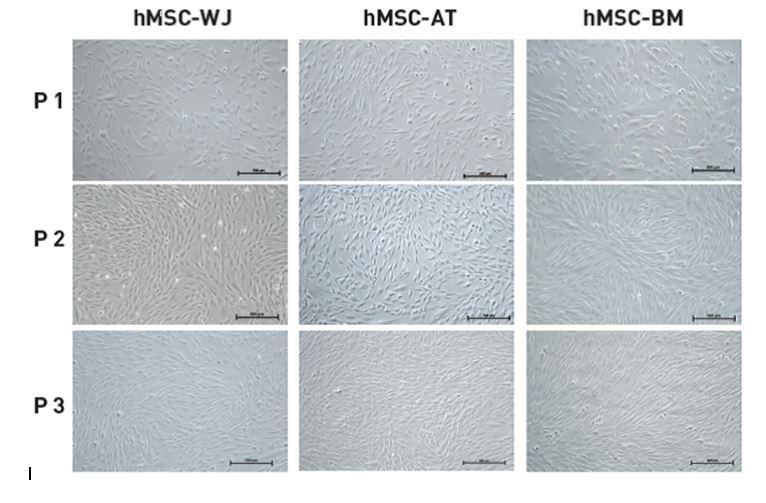 Biological Industries - MSC NutriStem