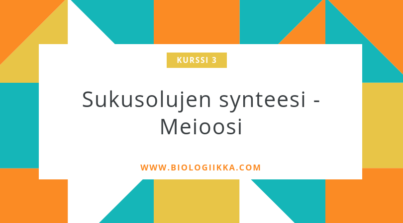 meioosi