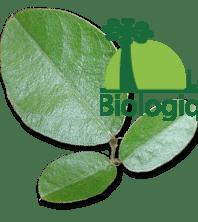 Le desmodium adscendens bio pour nettoyer et régénérer le foie
