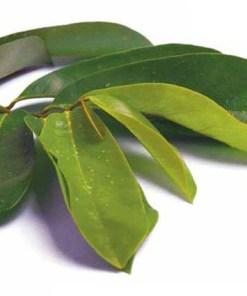 Tisane de Graviola corossol du laboratoire Biologiquement, un anti cancer naturel puissant
