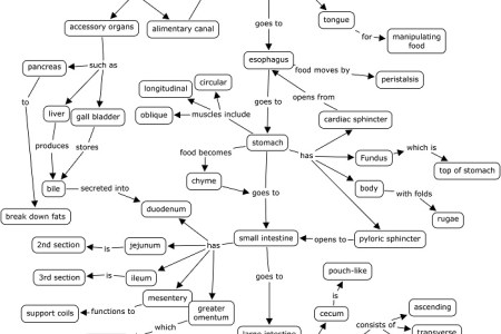 Energy concept map masteringbiology full hd pictures 4k ultra chapter solutions masteringbiology with pearson etext complete the following concept map to review some of the concepts of gas exchange energy concept map fandeluxe Images
