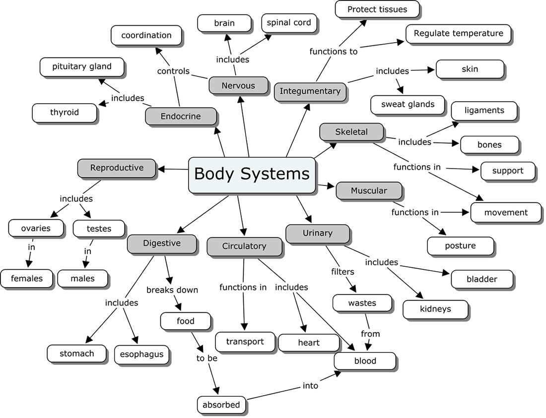 Organ Systems Concept Map