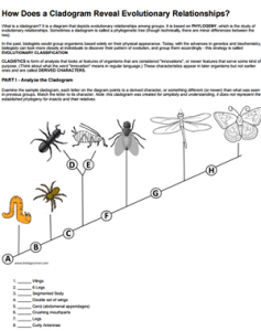 How Does A Cladogram Reveal Evolutionary Relationships