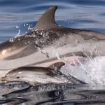 Thalassapedia: θαλάσσια θηλαστικά της Ελλάδας