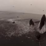 Αναδυόμενες φάλαινες…