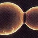 Συνομιλίες βακτηρίων