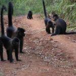 Πίθηκοι αναζητούν τροφή ανάλογα με τις καιρικές προβλέψεις