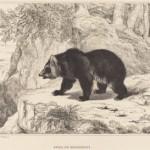 Δωρεάν εικόνες από τη συλλογή της National Gallery of Art