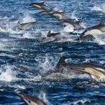 Δελφίνια και φάλαινες σε υπέργεια πλάνα