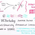 Βίντεο: το σύστημα CRISPR/Cas