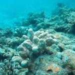 H οξίνιση των ωκεανών και η κλιματική αλλαγή